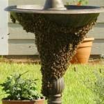 swarm44